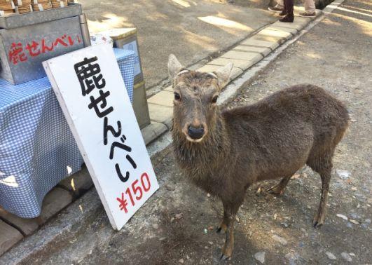 奈良公園で鹿せんべいのあげ方を知らずにやらかした私の失敗!